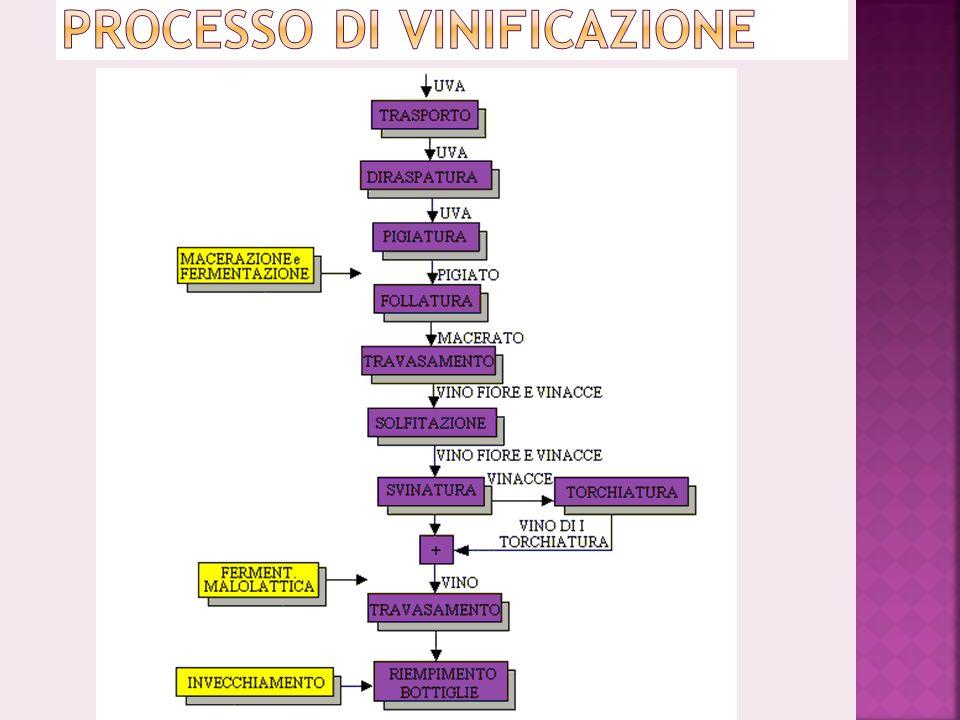 Processo di Vinificazione