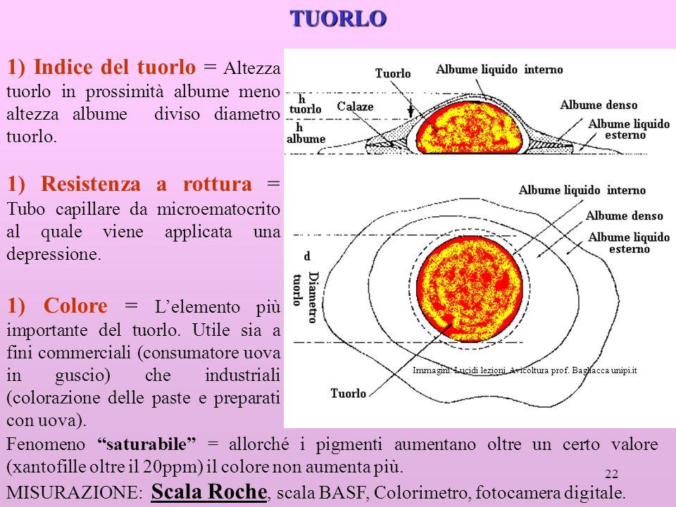 TUORLO 1) Indice del tuorlo = Altezza tuorlo in prossimità albume meno altezza albume diviso diametro tuorlo.