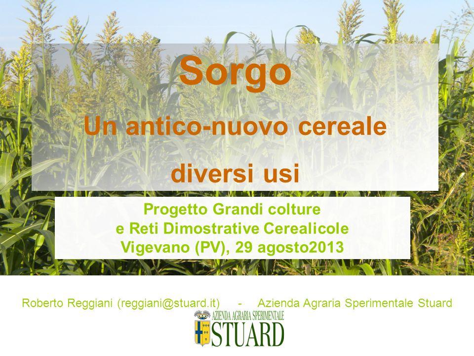 Sorgo Un antico-nuovo cereale diversi usi Progetto Grandi colture