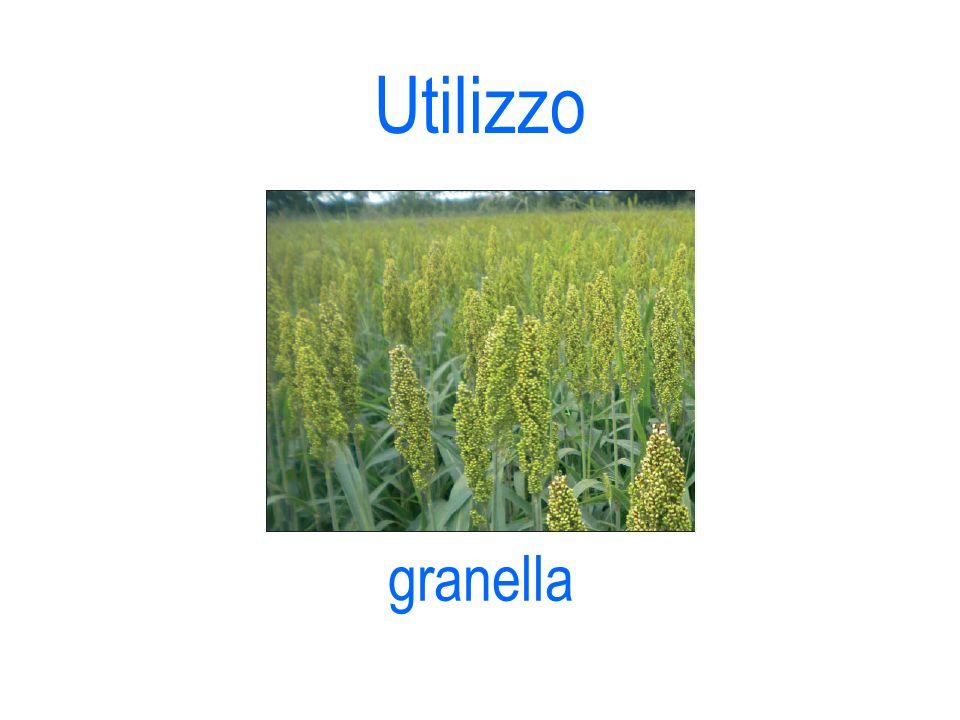 Utilizzo granella 10