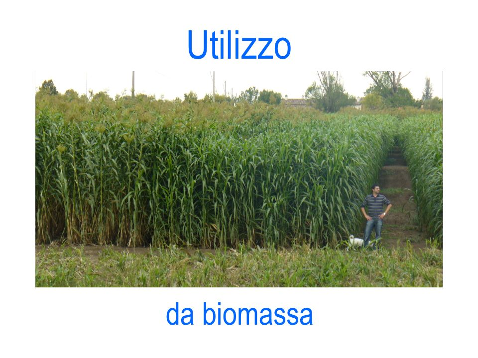 Utilizzo da biomassa 14