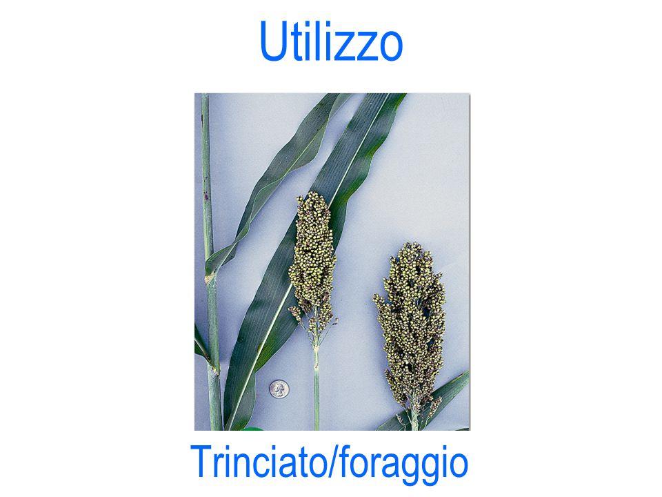 Utilizzo Trinciato/foraggio 18