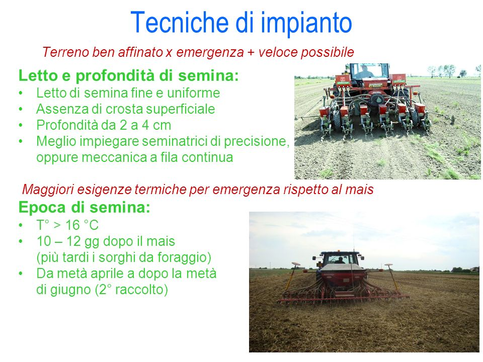 Tecniche di impianto Letto e profondità di semina: Epoca di semina: