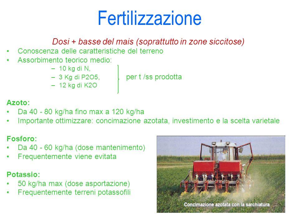 Dosi + basse del mais (soprattutto in zone siccitose)