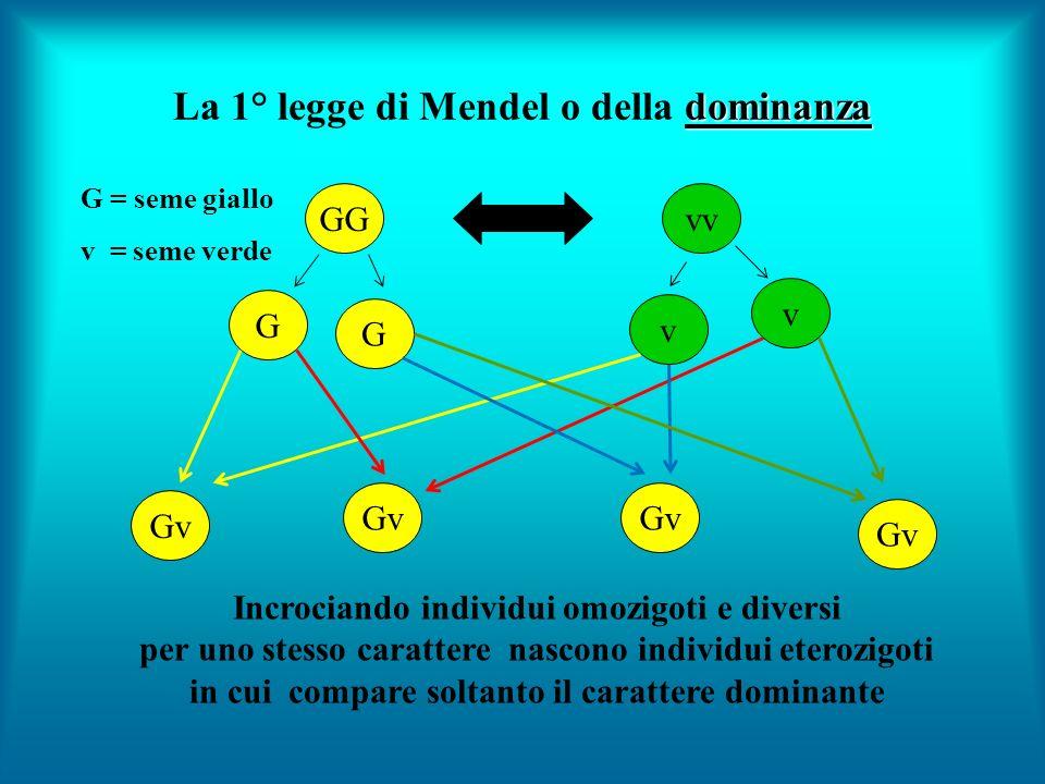 La 1° legge di Mendel o della dominanza