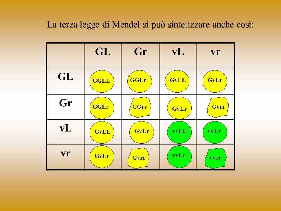 La terza legge di Mendel si può sintetizzare anche così: