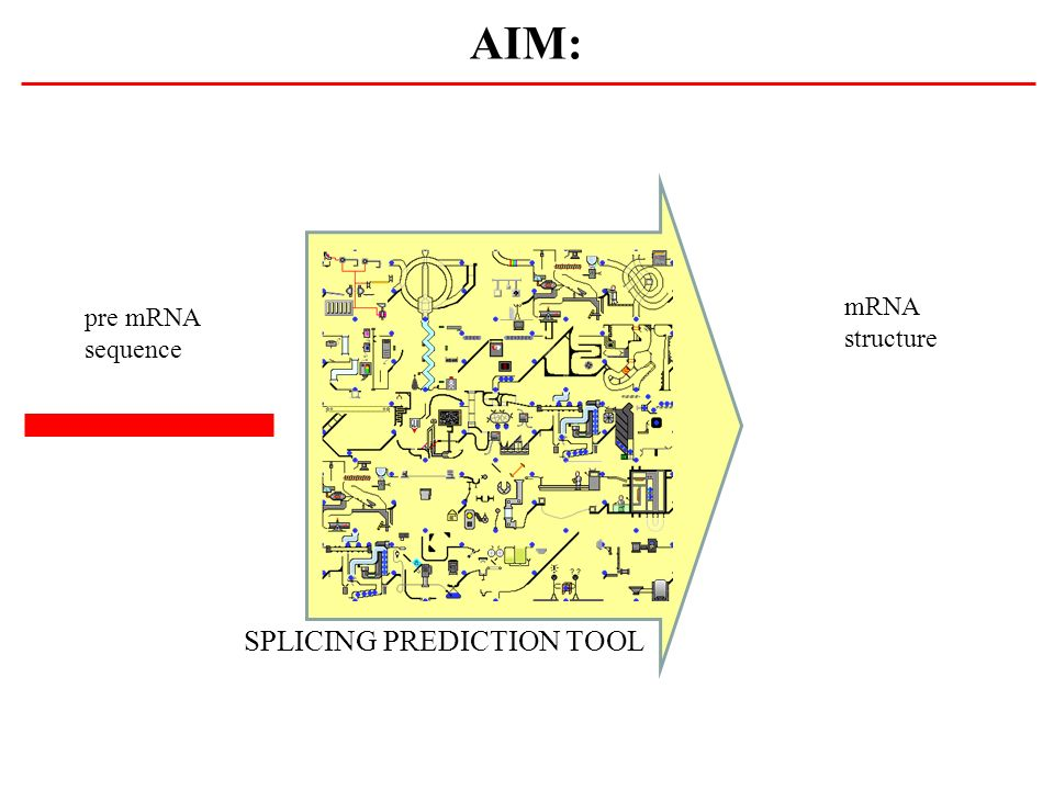 AIM: mRNA structure pre mRNA sequence SPLICING PREDICTION TOOL 10