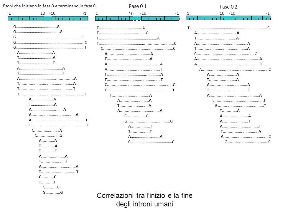 Correlazioni tra l'inizio e la fine degli introni umani