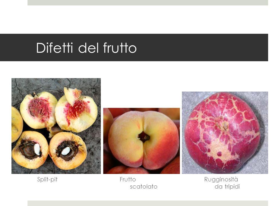 Difetti del frutto Split-pit Frutto scatolato Rugginosità da tripidi