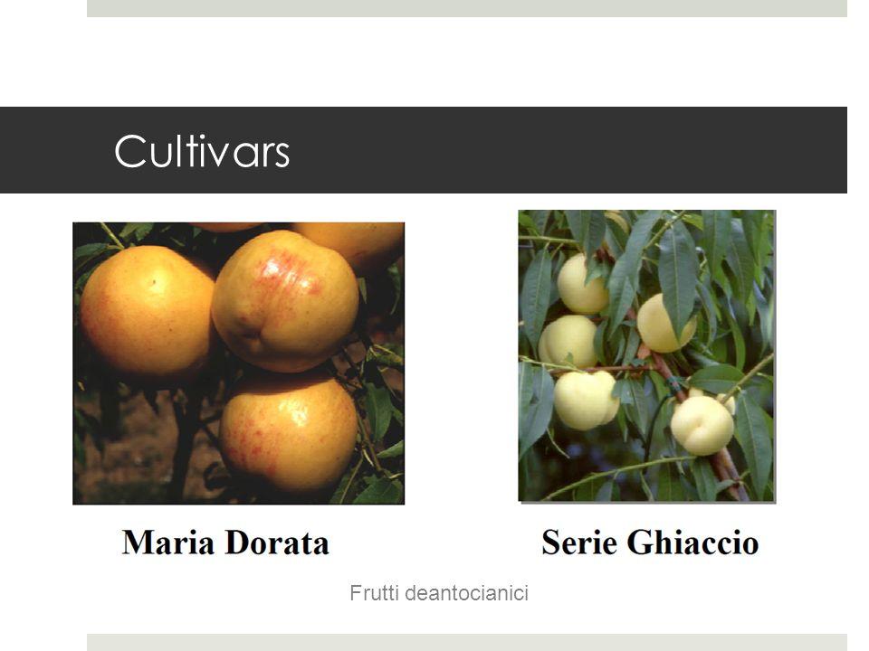 Cultivars Frutti deantocianici