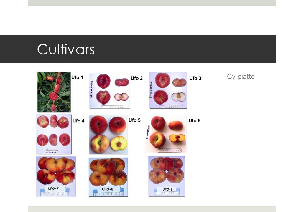 Cultivars Cv piatte