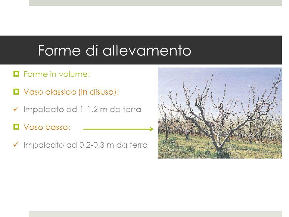 Forme di allevamento Forme in volume: Vaso classico (in disuso):