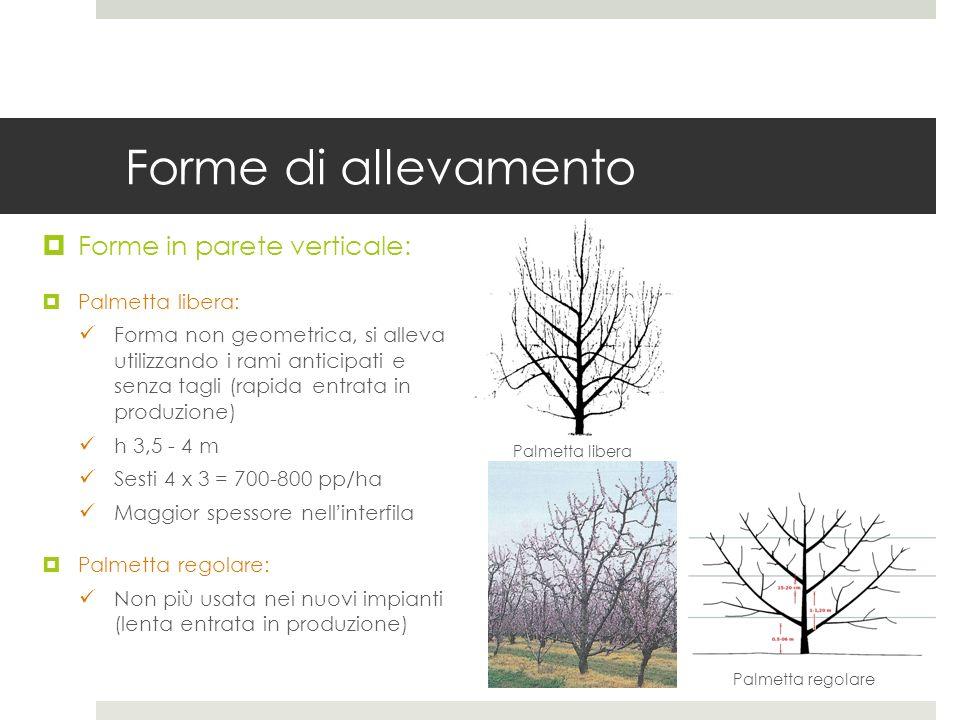 Forme di allevamento Forme in parete verticale: Palmetta libera: