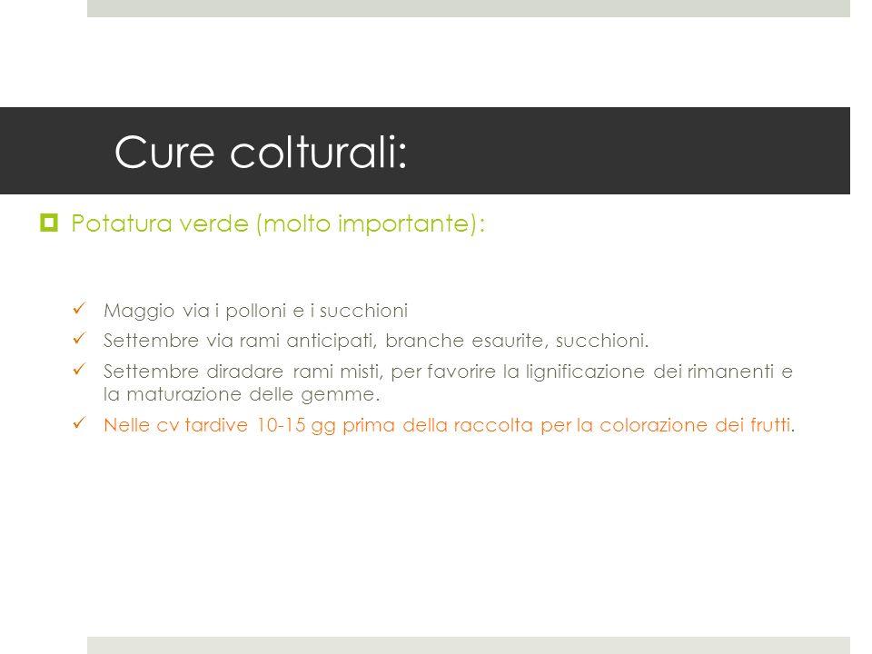 Cure colturali: Potatura verde (molto importante):