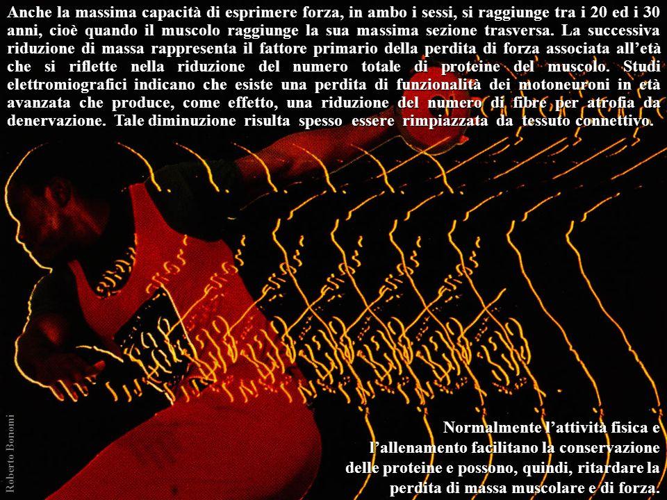 Anche la massima capacità di esprimere forza, in ambo i sessi, si raggiunge tra i 20 ed i 30 anni, cioè quando il muscolo raggiunge la sua massima sezione trasversa. La successiva riduzione di massa rappresenta il fattore primario della perdita di forza associata all'età che si riflette nella riduzione del numero totale di proteine del muscolo. Studi elettromiografici indicano che esiste una perdita di funzionalità dei motoneuroni in età avanzata che produce, come effetto, una riduzione del numero di fibre per atrofia da denervazione. Tale diminuzione risulta spesso essere rimpiazzata da tessuto connettivo.