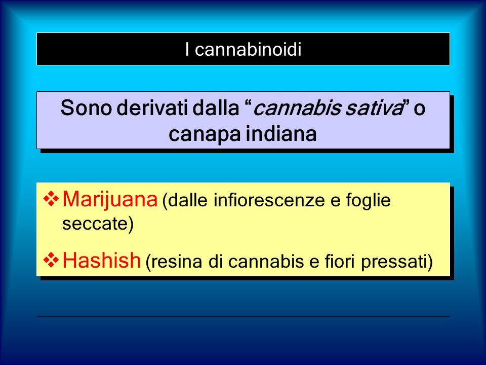 Sono derivati dalla cannabis sativa o canapa indiana