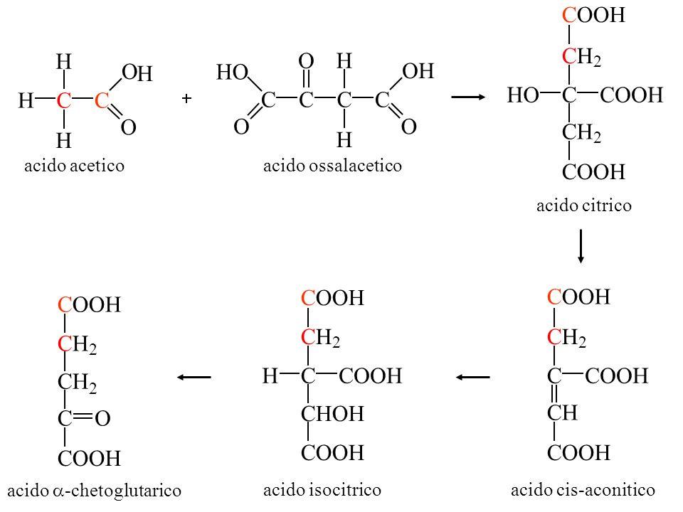 C H O acido a-chetoglutarico acido isocitrico acido cis-aconitico