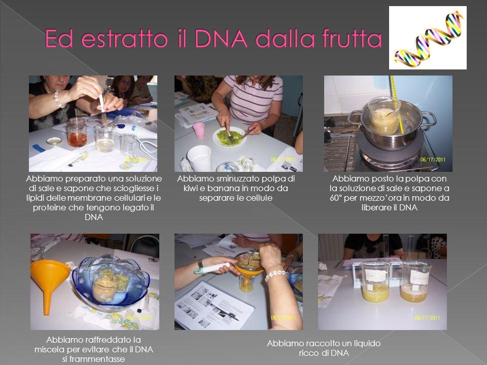 Ed estratto il DNA dalla frutta