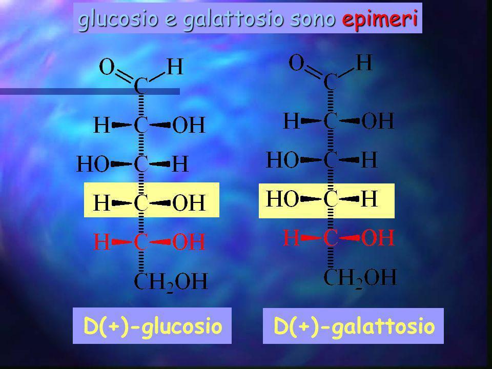 glucosio e galattosio sono epimeri