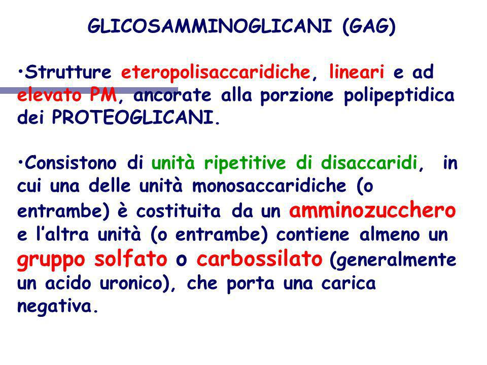 GLICOSAMMINOGLICANI (GAG)