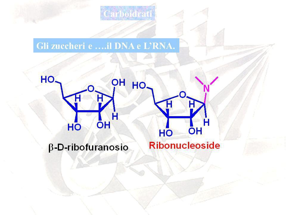 Carboidrati Gli zuccheri e ….il DNA e L'RNA.