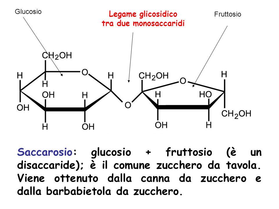 Glucosio Legame glicosidico. tra due monosaccaridi. Fruttosio.