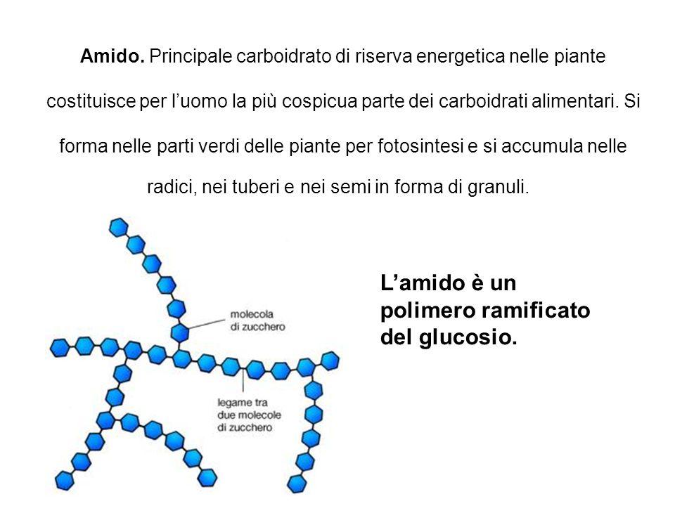 L'amido è un polimero ramificato del glucosio.