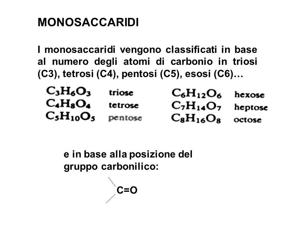 MONOSACCARIDI I monosaccaridi vengono classificati in base al numero degli atomi di carbonio in triosi (C3), tetrosi (C4), pentosi (C5), esosi (C6)…