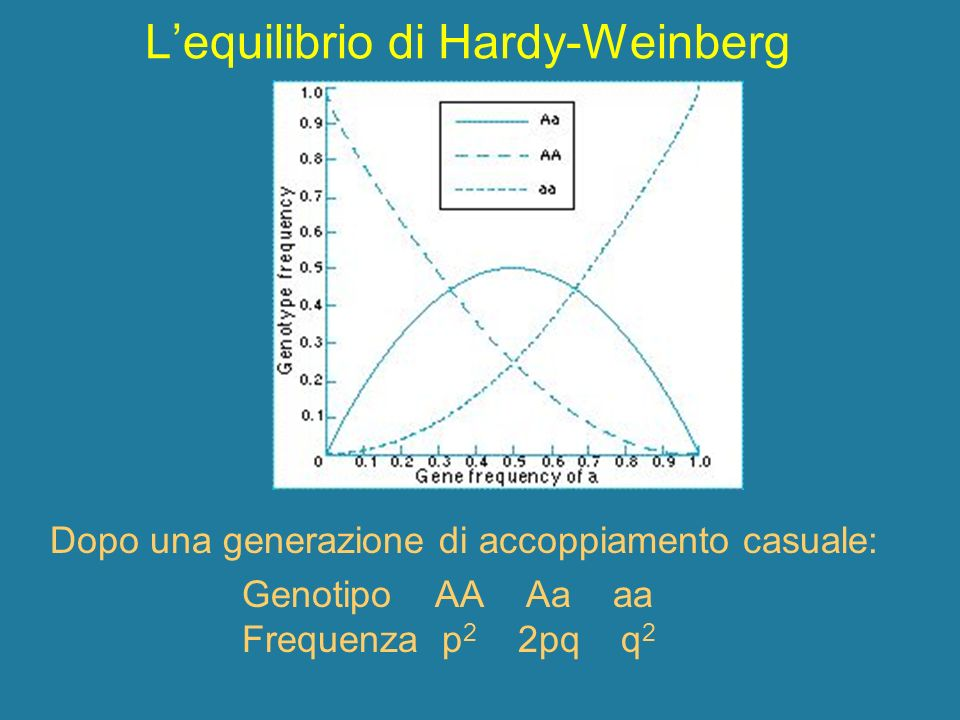 L'equilibrio di Hardy-Weinberg