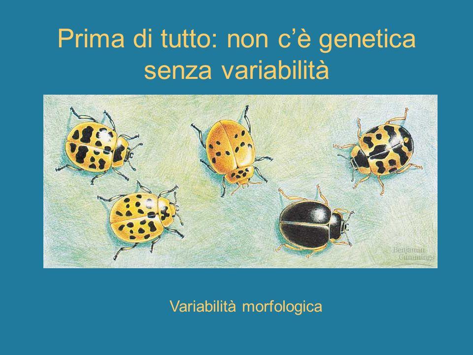 Prima di tutto: non c'è genetica senza variabilità
