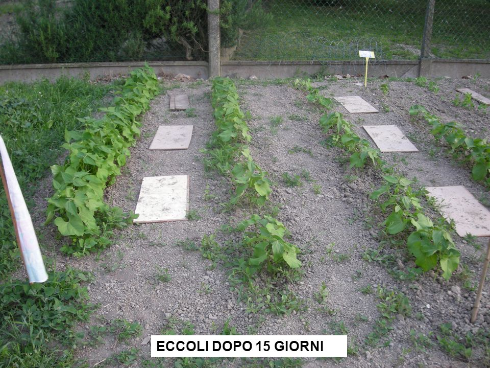 ECCOLI DOPO 15 GIORNI