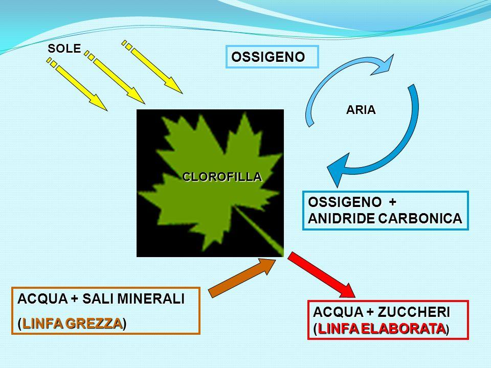 OSSIGENO OSSIGENO + ANIDRIDE CARBONICA ACQUA + SALI MINERALI