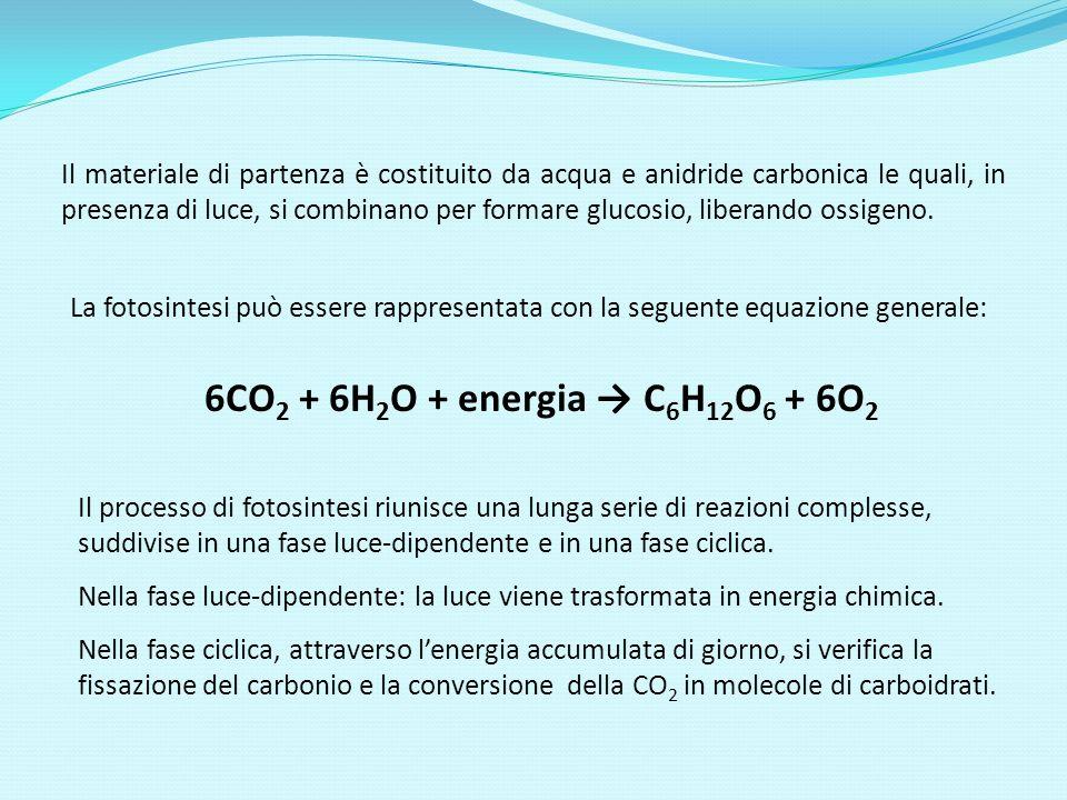 Il materiale di partenza è costituito da acqua e anidride carbonica le quali, in presenza di luce, si combinano per formare glucosio, liberando ossigeno.