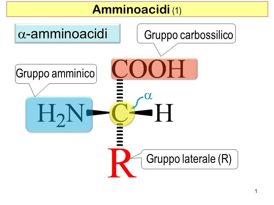 a-amminoacidi a Amminoacidi (1) Gruppo carbossilico Gruppo amminico
