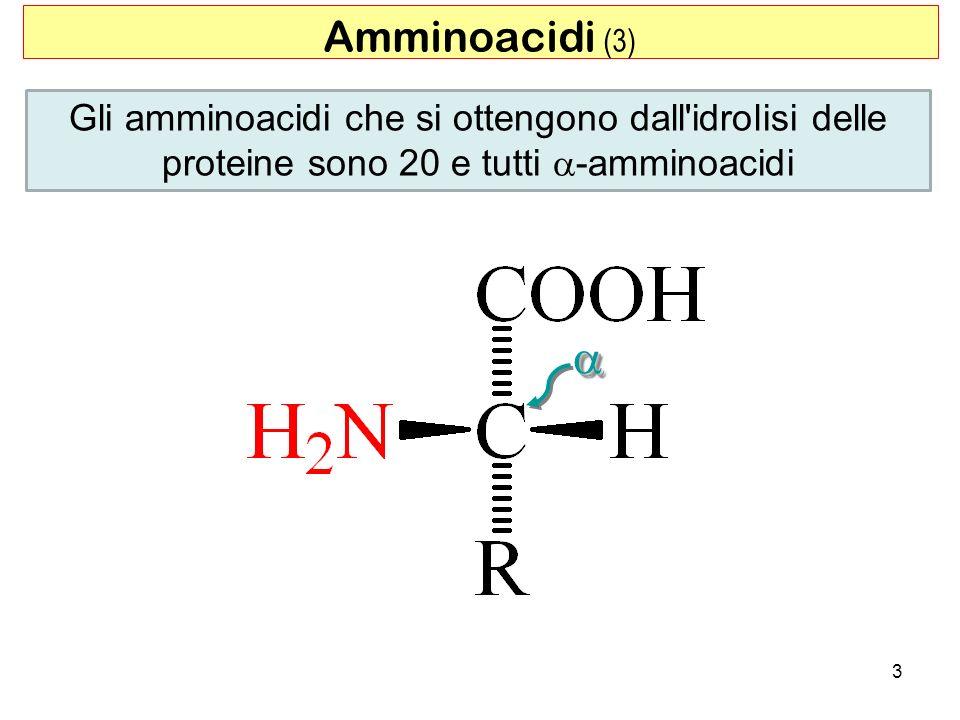 Amminoacidi (3) Gli amminoacidi che si ottengono dall idrolisi delle proteine sono 20 e tutti a-amminoacidi.