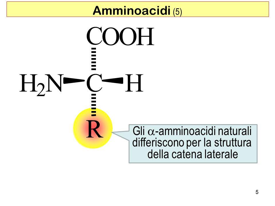 C O O H H N C H R 2 Amminoacidi (5) Gli a-amminoacidi naturali