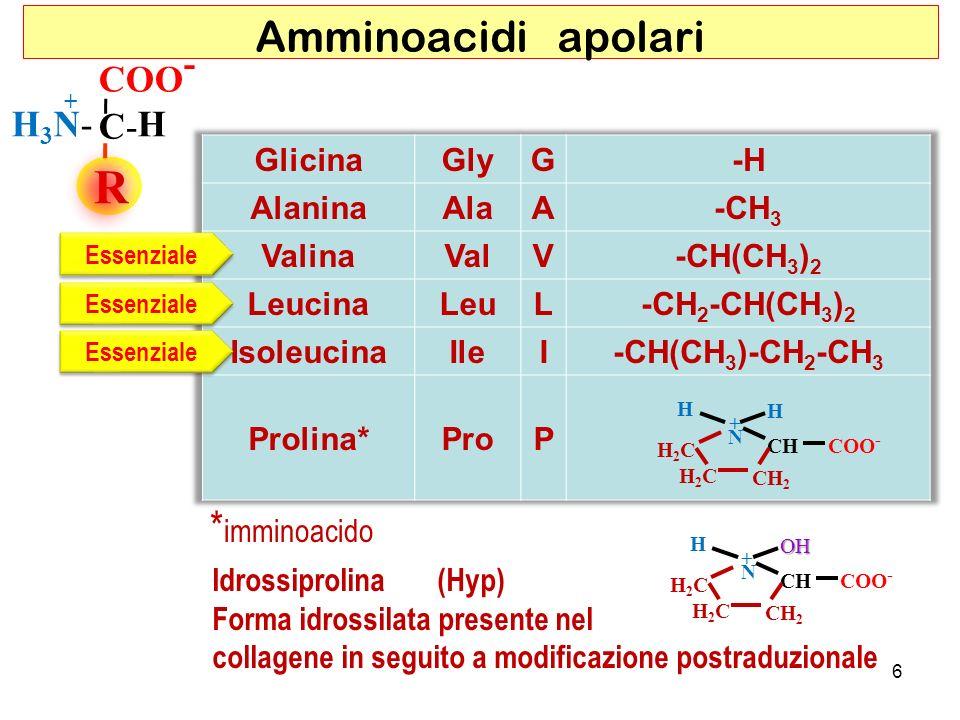 R Amminoacidi apolari *imminoacido COO- C- H H3N- Glicina Gly G -H