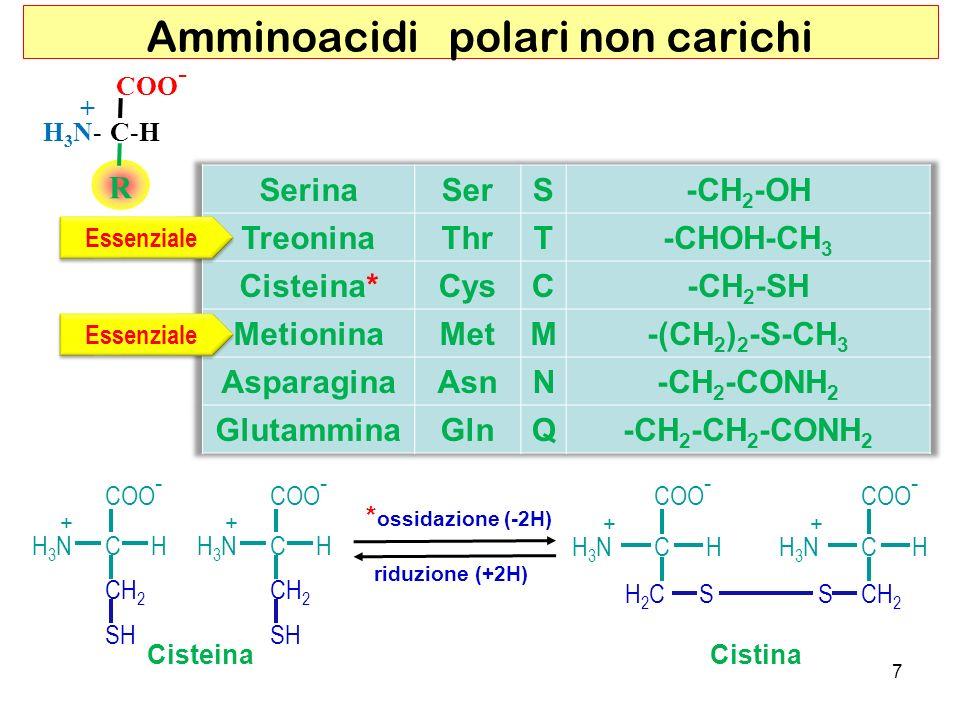 Amminoacidi polari non carichi