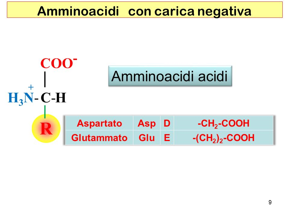 Amminoacidi con carica negativa