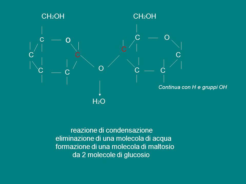 o CH2OH CH2OH C O C C C C O C C C C H2O reazione di condensazione