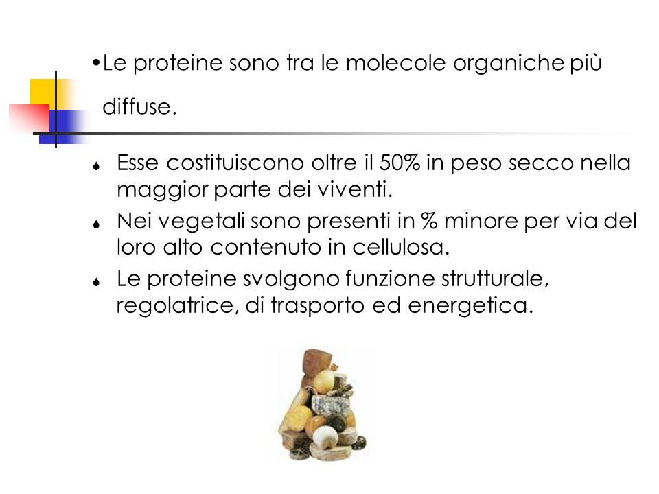 Le proteine sono tra le molecole organiche più diffuse.