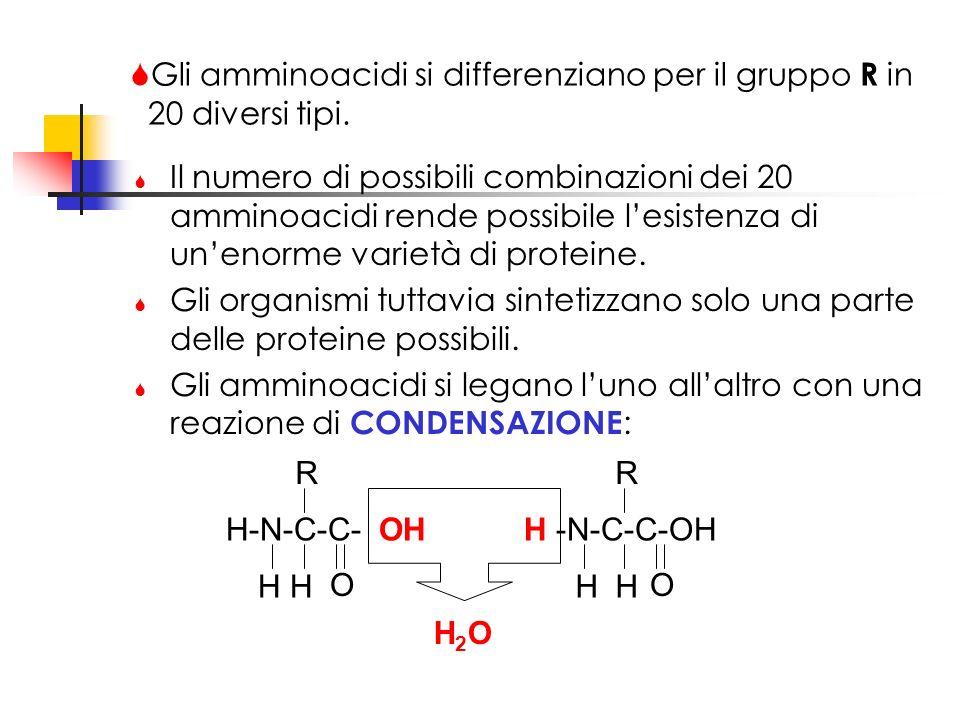 Gli amminoacidi si differenziano per il gruppo R in 20 diversi tipi.