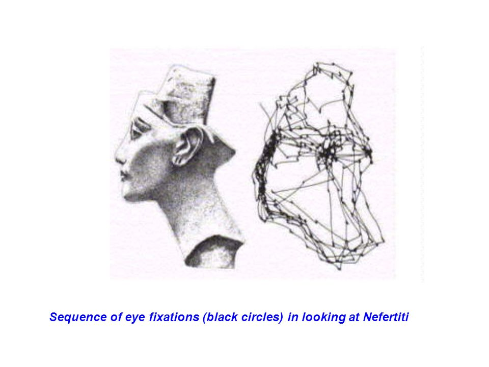 Sequence of eye fixations (black circles) in looking at Nefertiti