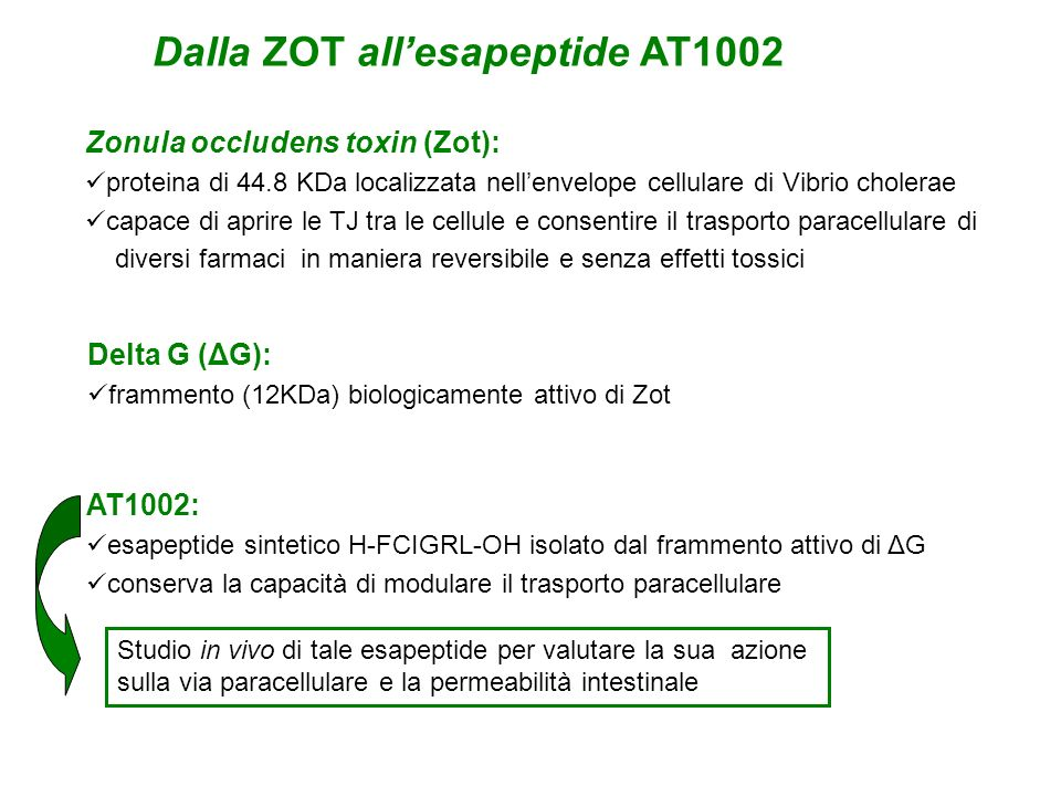 Dalla ZOT all'esapeptide AT1002