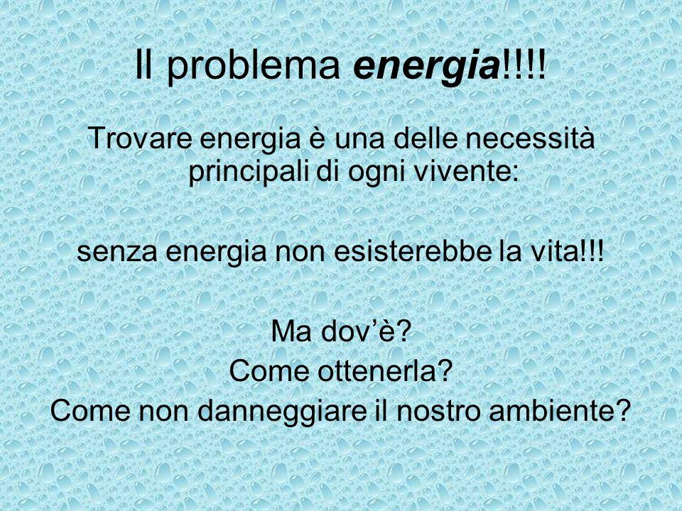 Il problema energia!!!!Trovare energia è una delle necessità principali di ogni vivente: senza energia non esisterebbe la vita!!!
