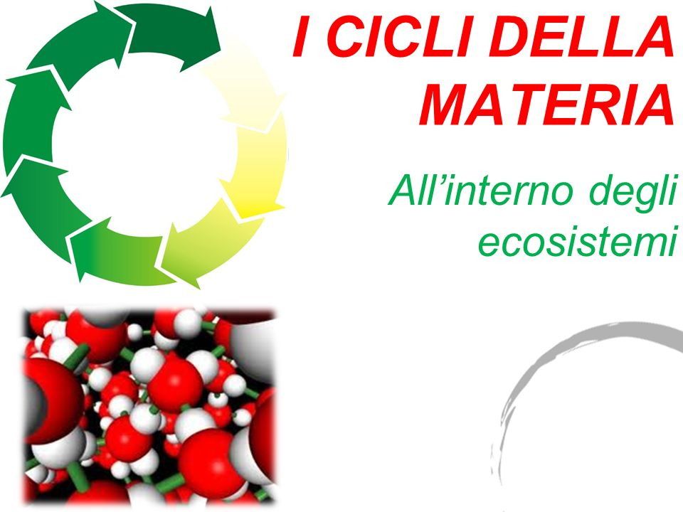 All'interno degli ecosistemi