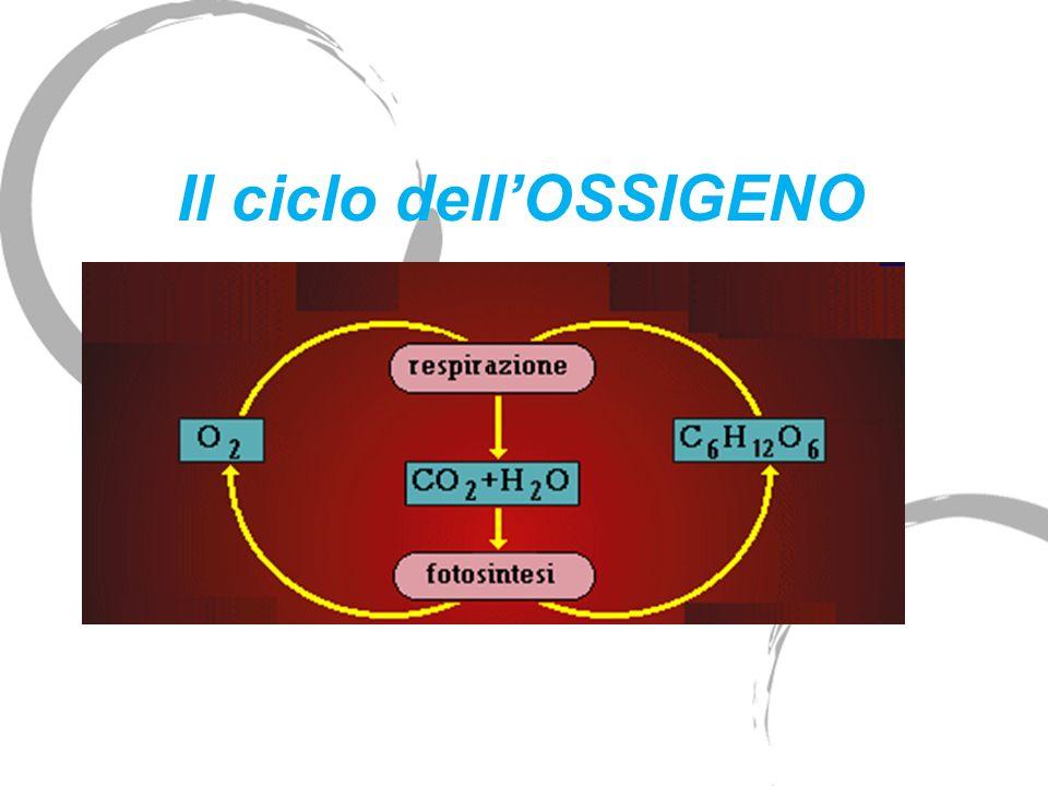 Il ciclo dell'OSSIGENO