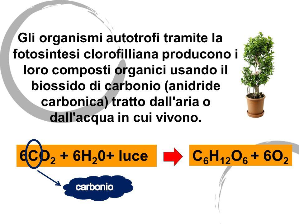 Gli organismi autotrofi tramite la fotosintesi clorofilliana producono i loro composti organici usando il biossido di carbonio (anidride carbonica) tratto dall aria o dall acqua in cui vivono.