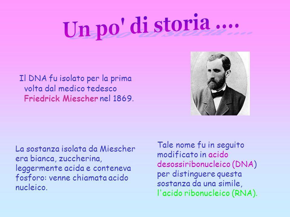 Un po di storia .... Il DNA fu isolato per la prima volta dal medico tedesco Friedrick Miescher nel 1869.