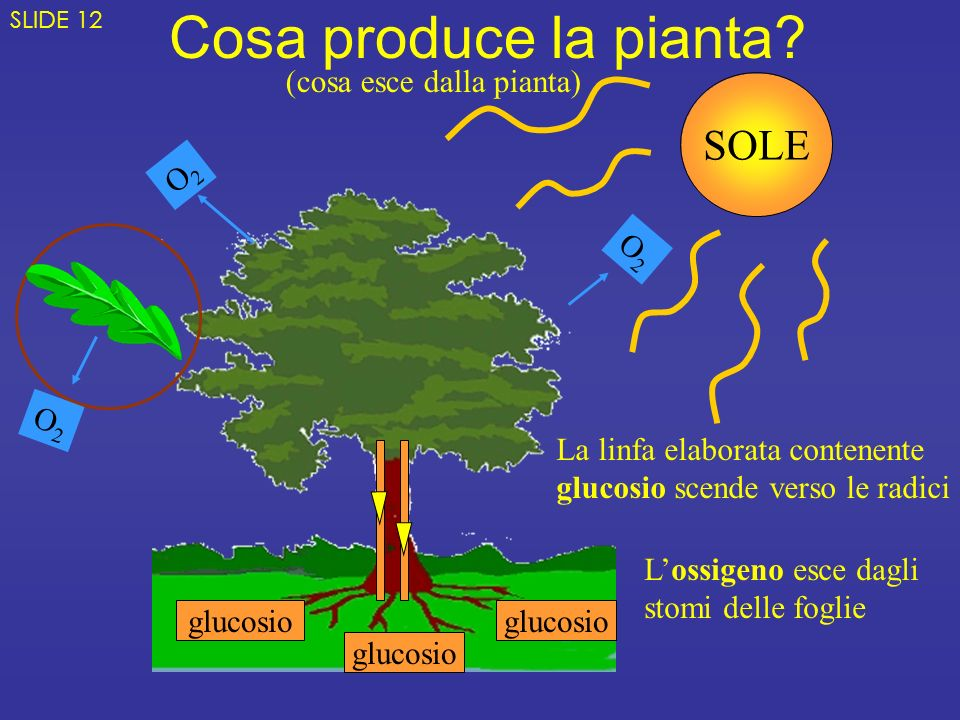 Cosa produce la pianta SOLE (cosa esce dalla pianta) O2 O2 O2